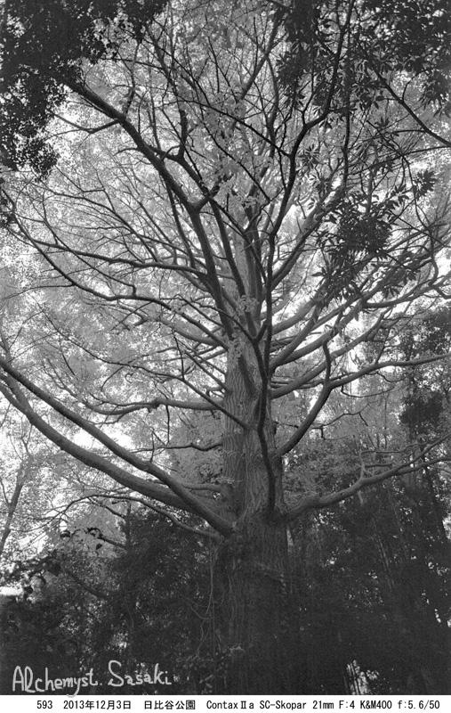 日比谷公園の秋593-11