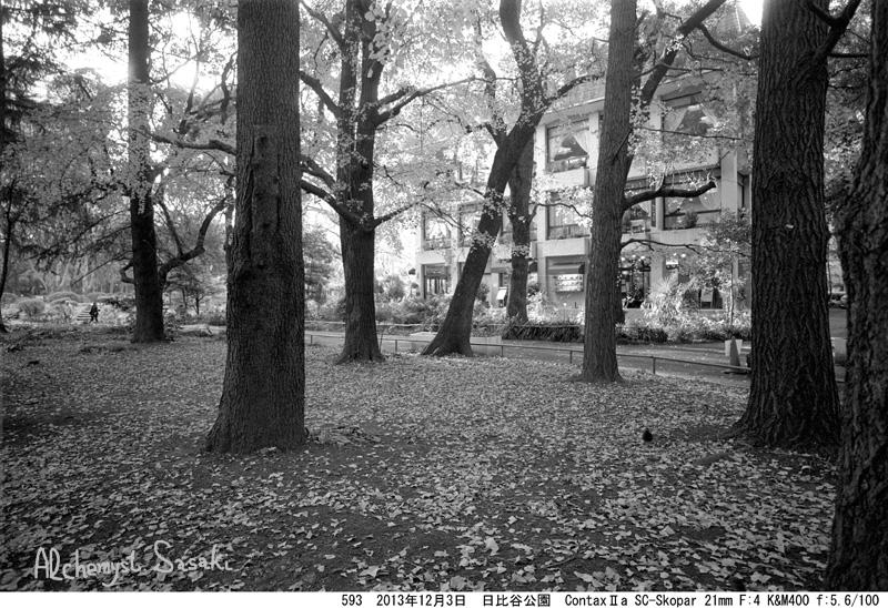 日比谷公園の秋593-7