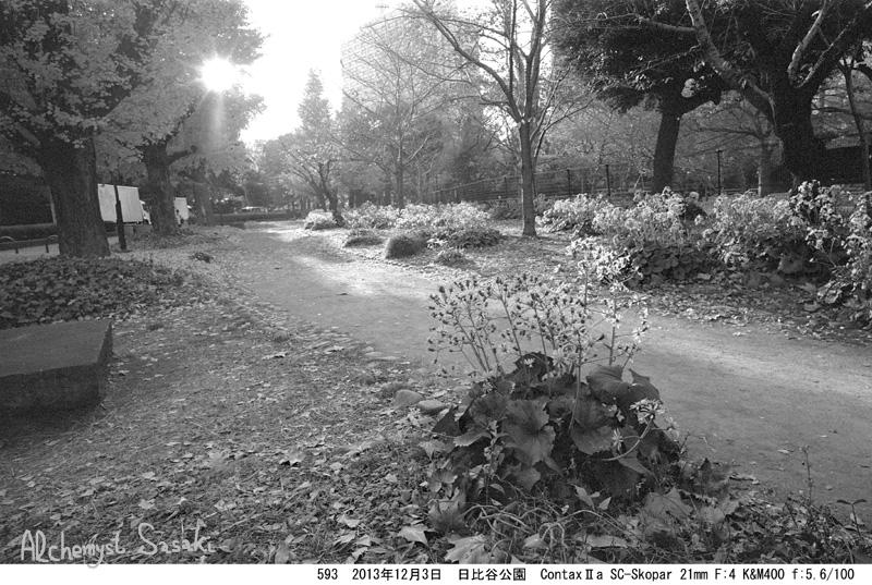日比谷公園の秋593-10