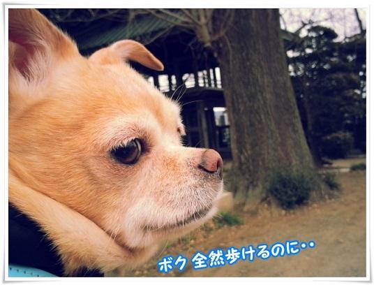 20140206_152050arukeru.jpg