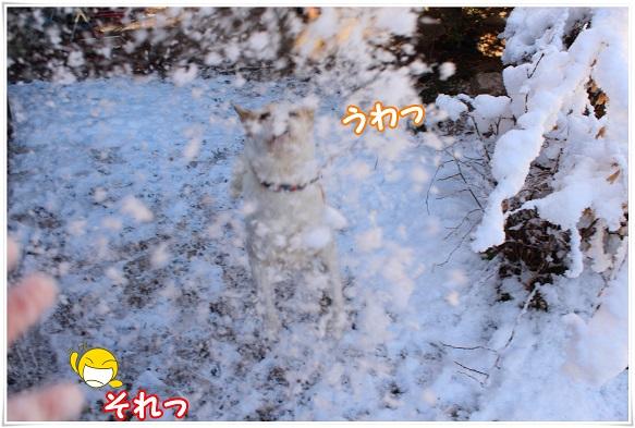 IMG_4539yukigassenn.jpg