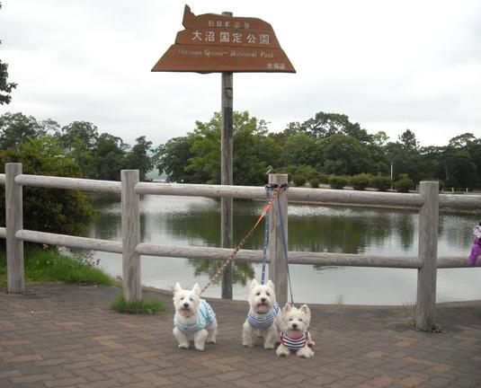 20119-16-1.jpg