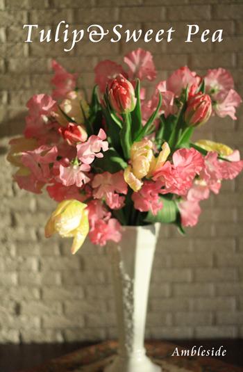 IMG_3063-tulipSweet-pea.jpg