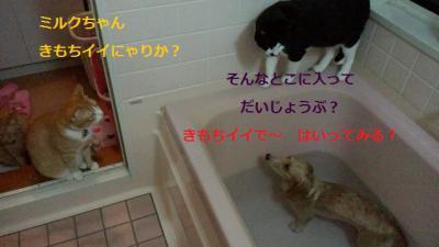 2011101321190000.jpg