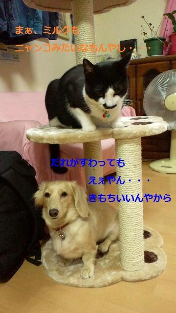 2011102220370000.jpg