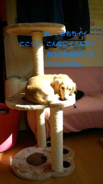 2011102613370001.jpg