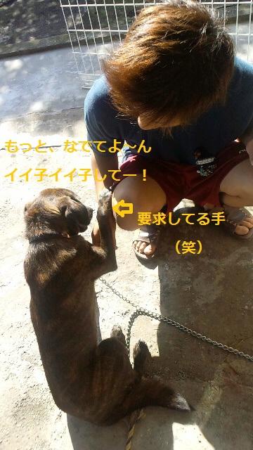 2011112012560000.jpg
