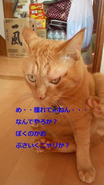 2011112918080000.jpg