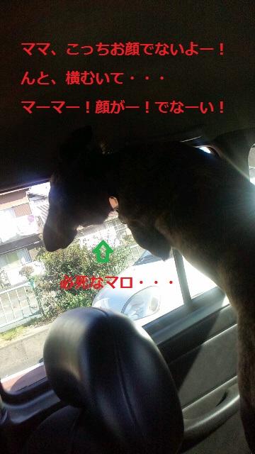 2011121121090000.jpg