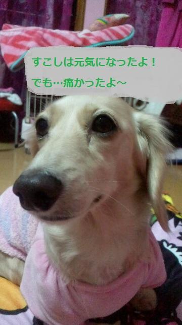 2011122118380000.jpg