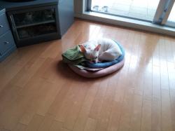 1001眠り犬2