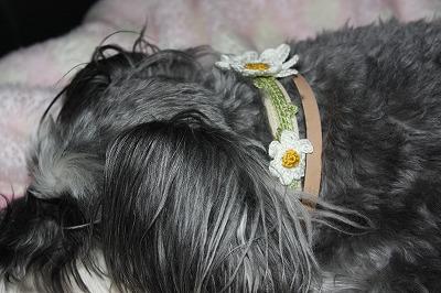 花の首輪 001