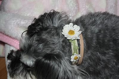 花の首輪 002