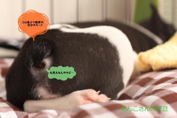 004_convert_20111114182804.jpg