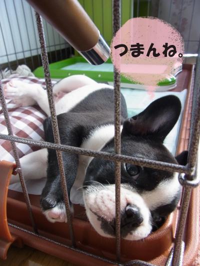 f009お_convert_20111122005119