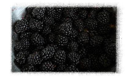 ブラックベリー1