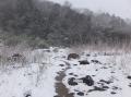 川原の小道