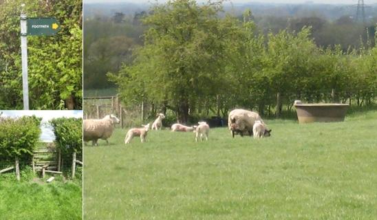 羊牧羊入口