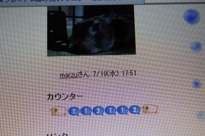 IMG_7216_convert_20130717094745.jpg