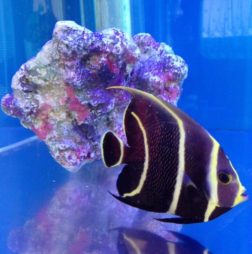 fish_0318_01.jpg