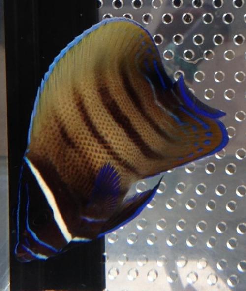 fish_0318_02.jpg