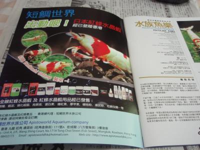 日本紅蜂水晶蝦