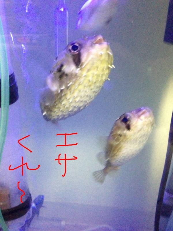 fc2blog_201303222310550b4.jpg