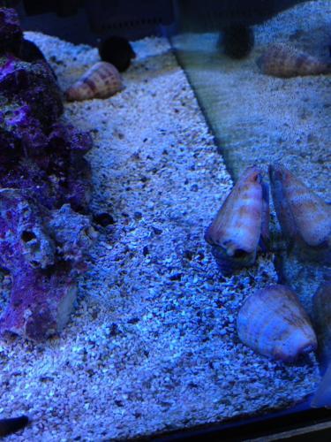 マガキ貝2