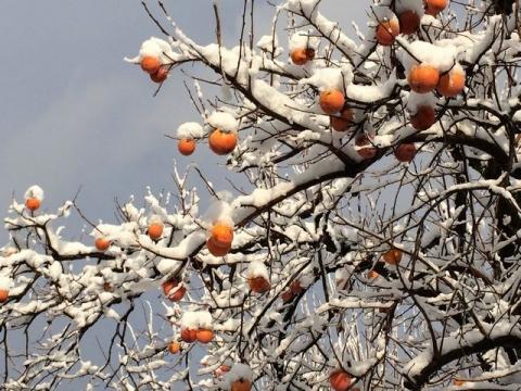 2013-12-14残り柿