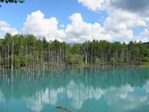 130715美瑛青い池