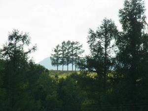 130715嵐の木
