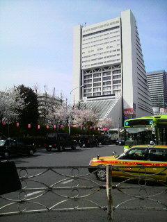 東京は桜が満開♪