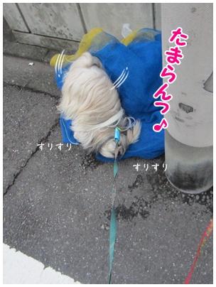 2011-09-27-03.jpg