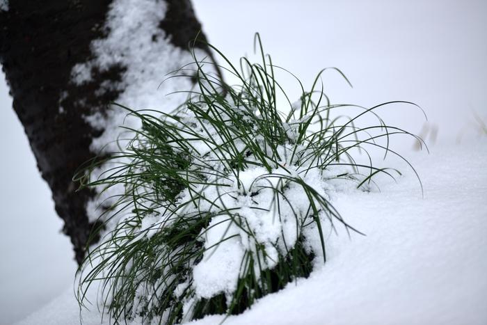雪の情景-1