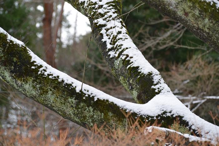 雪の情景-2