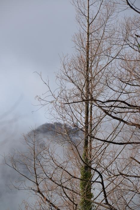 冬の木-2