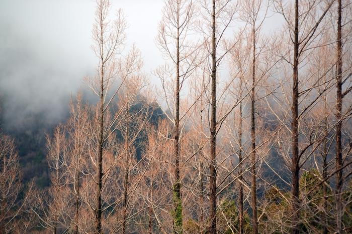 冬の木-4