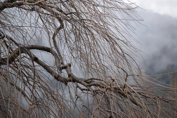 冬の木-3