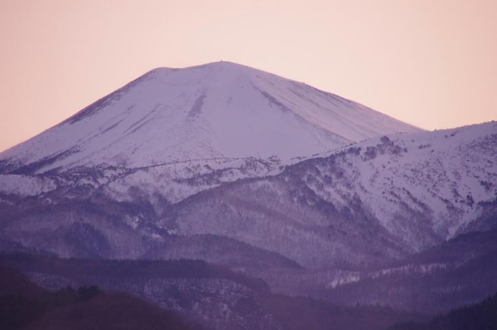 桜色小富士