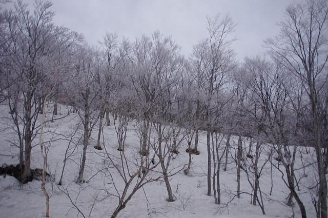 不動沢の霧氷
