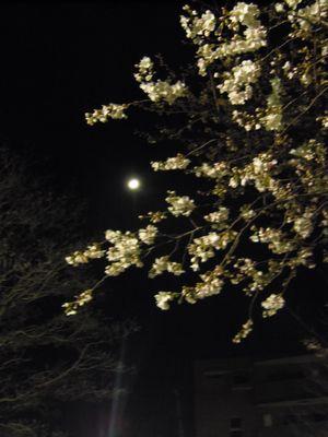 moon_20130321022837.jpg