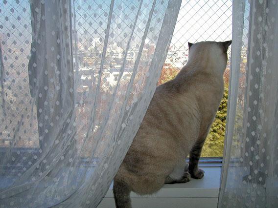 通りを観察するアッシュ