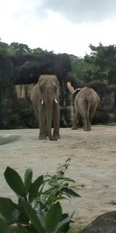 【台北】台北動物園のゾウ