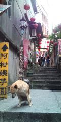 【台北】九份 イヌが迎えてくれました