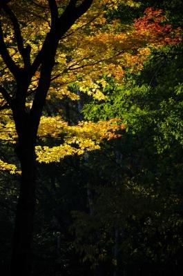 芸術の森2014-155