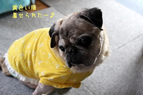 団吉は黄色い服