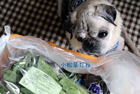 小松菜だね~!