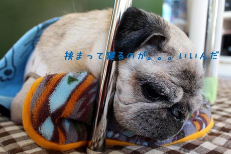 挟まって寝る。。。団吉