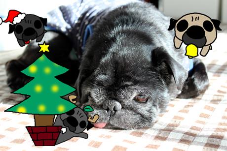 クリスマス近し!