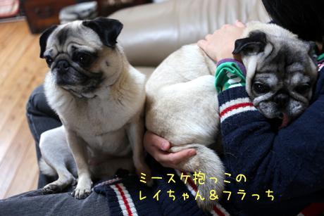 ミースケ抱っこフラっち&レイちゃん!
